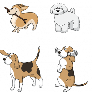 Une prise en charge rapide pour les animaux en détresse